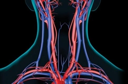 Samo 1100 din ultrazvuk sa kolor doplerom KRVNIH SUDOVA VRATA + izveštaj lekara u specijalističkoj ordinaciji SB Medic Vračar!
